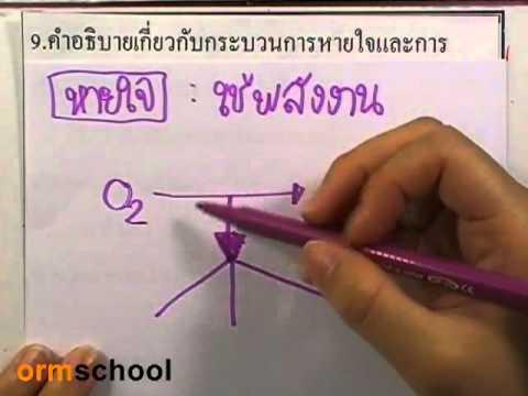 ข้อสอบเข้าม.1 : วิทยาศาสตร์ ตอน9