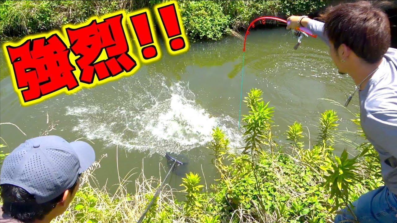 バケモノ級のパワーを持つ魚を小さな竿で釣り上げた!!