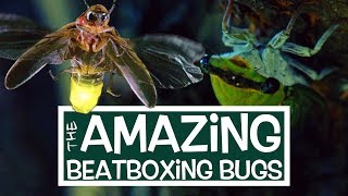 AMAZING BEATBOXING BUGS | Comedy Short