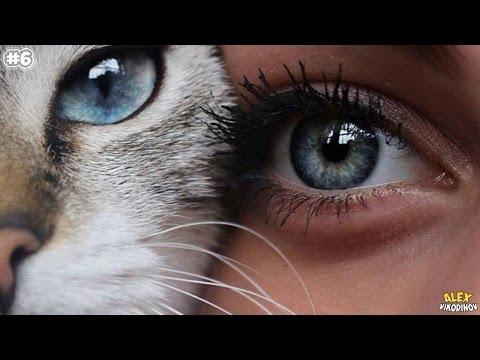 Как называются люди с разными глазами
