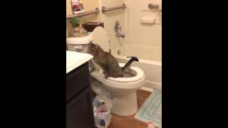 Potty Trained Cat