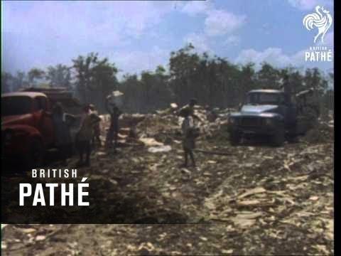 Rubbish Dump In Port Of Spain  (1971)