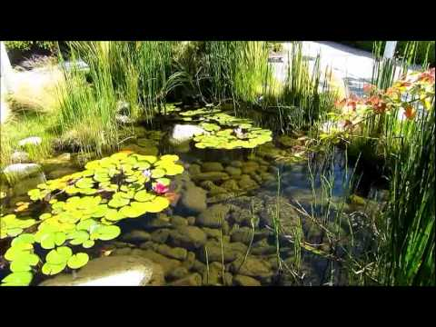 Idea Design Pond Yard Decoration Youtube