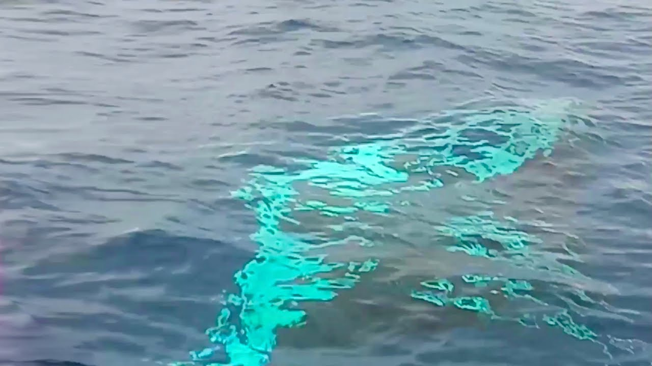 Huge manta ray scares tourists as it swims under boat