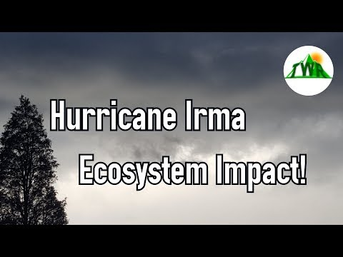 Short Report: Irma Impact + Important Channel News!
