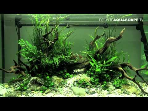 Aquascaping - The Art of the Planted Aquarium 2012, part 2