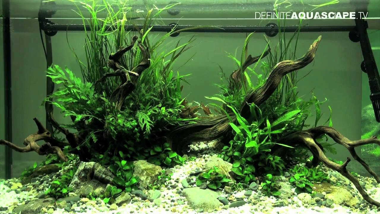 Aquascaping - The Art of the Planted Aquarium 2012, part 2 ...