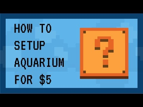 How to setup freshwater aquarium for low cost