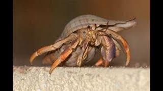 My hermet crab found
