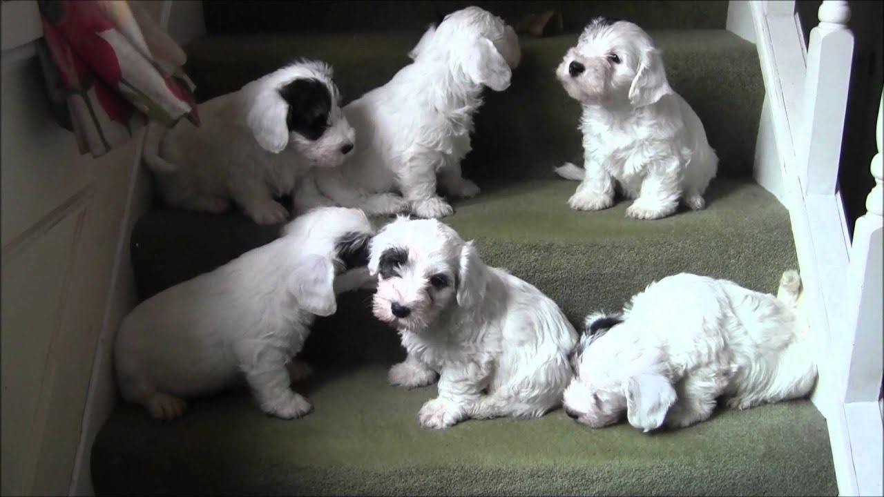 Old Fashioned Dog Breeders