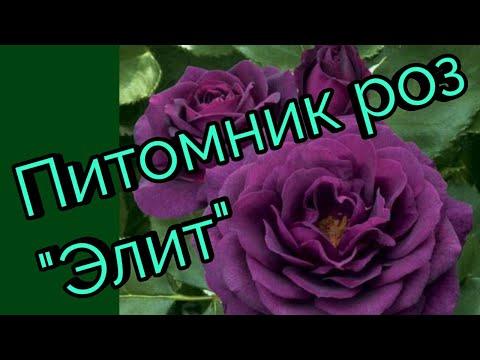 Розы из питомника Элит.Распаковка.