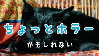 睡魔に戦いを挑んだ猫の結末 thumbnail