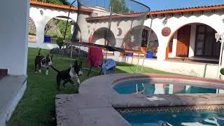 Bull terrier Swimming time