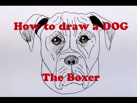 How To Draw A Dog The Boxer Youtube