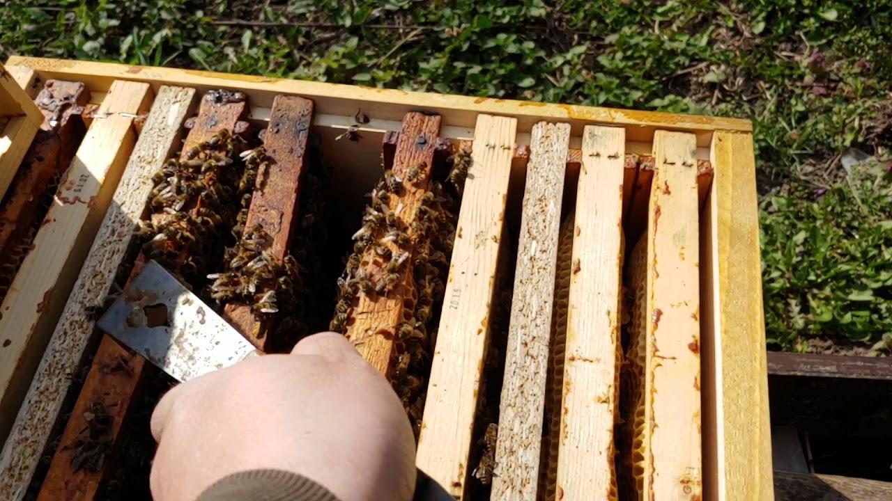 Generarea unui venit in plus. Bani din apicultura – In lumea albinelor