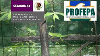 Iguanario San Julian Video.mpg