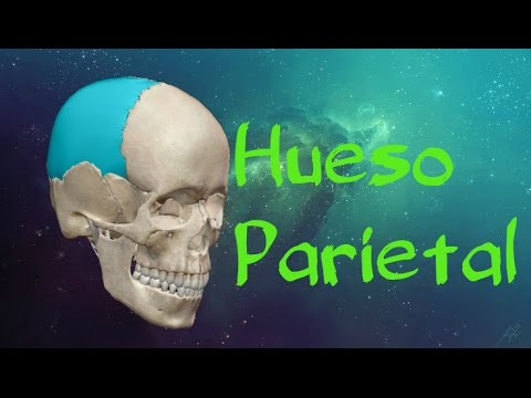 Hueso parietal - YouTube