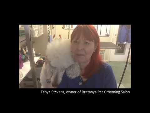 Ultrasonic Teeth Cleaning   Brittanya Pet Grooming Salon