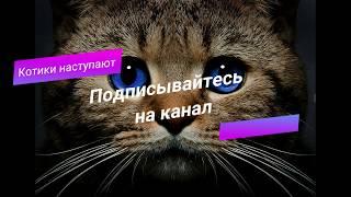 🐱Заставка канала Котики наступают!🐱 Смешные видео про котов и не только!!