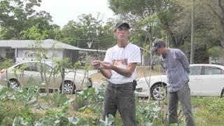Eat Your Weedies - Edible Weeds, Gardening Tips