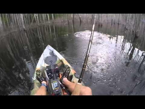 Hinze Dam Saratoga on surface lure kayak fishing go pro