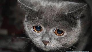 встреча кота и хозяина, ржака!!!! смотреть до конца!!!! АХАХХА