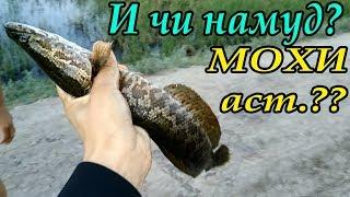 Рыбалка в Таджикистан, / Вот это Рыбалка 2-ЧАСТ