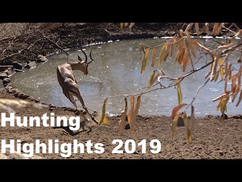My Africa Hunting Highlights For 2019( 8 Bowkills And 5 Riflekills  )