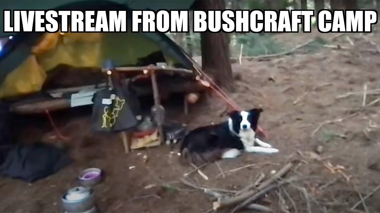 LIVESTREAM from bushcraft TENT camp