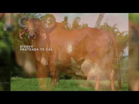 LOTE 14   RESPEITA FIV PARACATU - RCBR519