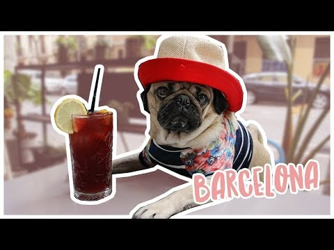 Barcelona Travel Diaries - Doug The Pug