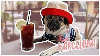 Barcelona Travel Diaries  Doug The Pug