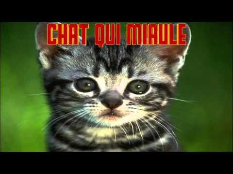 CHAT Qui MIAULE Le Cri Du CHAT  CAT Sounds CAT Meowing