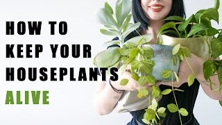 Do These Things To Keep Your House Plants Alive!
