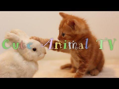 【動物の赤ちゃんに癒される動画】最高にかわいい動物の赤ちゃん、癒し、感動、おもしろ動画