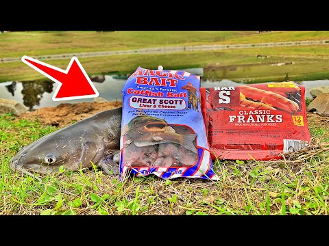 Best Catfish Bait Challenge! (Hotdogs VS Dough Bait!)