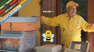 3 of 10 - Strumenti dell'apicoltore - Melario, coprifavo, alimentatore, griglia escludi regina