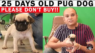 BIG MISTAKE | How Cruel People Are? | PUPPY MILLING | IMMATURE PUG [25 DAYS PUPPY] Baadal Bhandaari