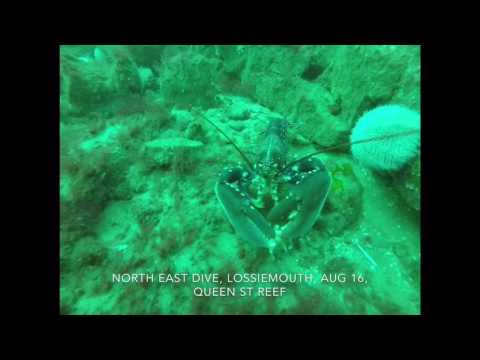 North East Dive, Queen street Reef, Lossiemouth