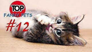 КОТЯТА и ЩЕНКИ, МАЛЫШИ, Приколы 2019, ТОП СМЕШНЫХ ВИДЕО С КОТАМИ/Смешные животные/Смешные кошки #12