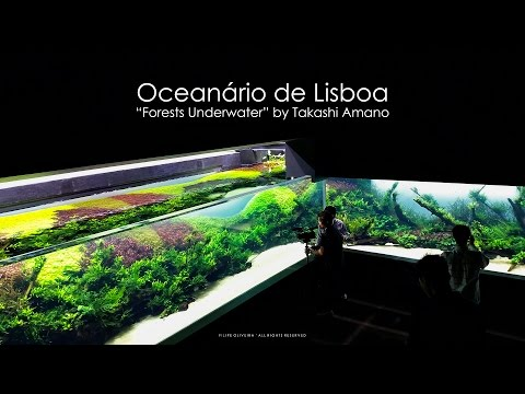 Grand Opening - Forests Underwater by Takashi Amano (Lisbon