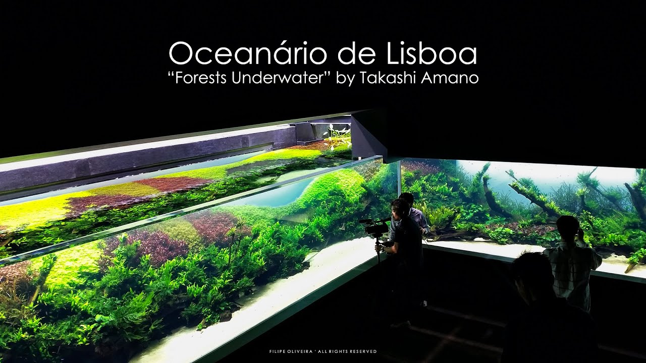... - Forests Underwater by Takashi Amano (Lisbon Oceanarium) - YouTube