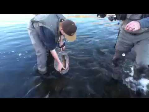 Flyfishing at the east walker