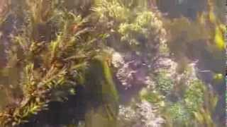 Seaweeds Short