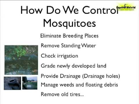 Natural Mosquito Repellent How To Keep Mosquitoes Away Youtube
