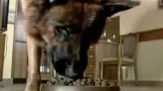 Рекс - корм для собак
