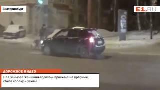 На Сулимова женщина водитель проехала на красный, сбила собаку и уехала