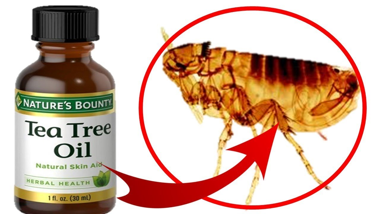 How To Use Tea Tree Oil To Treat Fleas On Cats Dogs Youtube