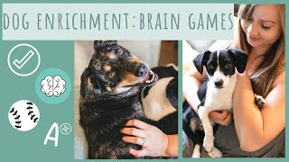Brain Games for Dogs - Dog Enrichment and Mental Stimulation