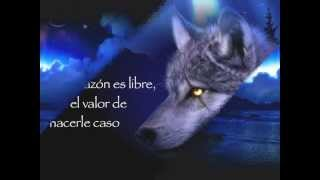 Como un Lobo   Miguel Bose y Bimba